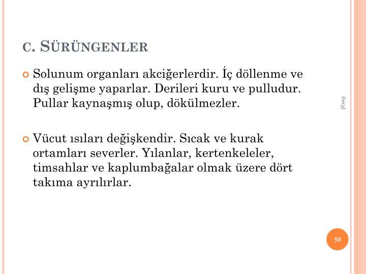 c. Srngenler