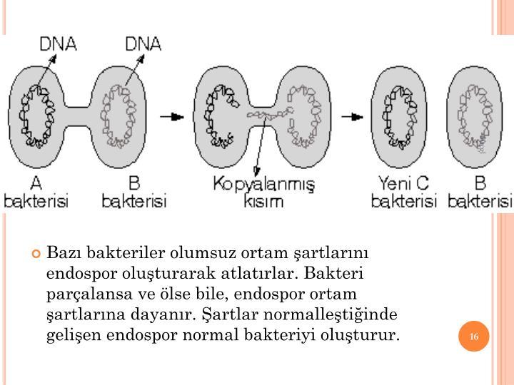 d. Bakterilerde reme