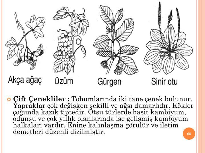 ift enekliler :