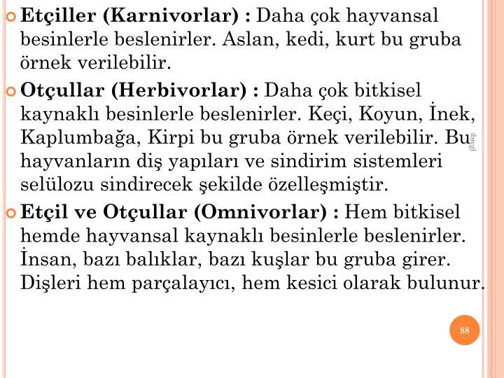 Etiller (Karnivorlar) :