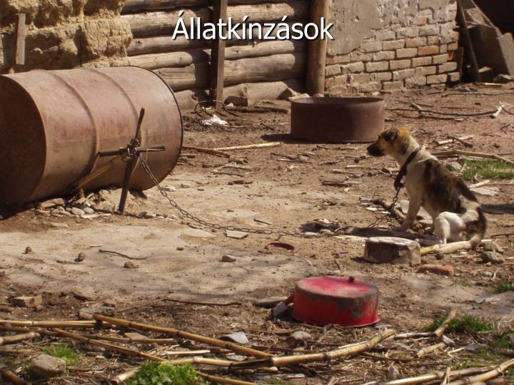 Állatkínzások