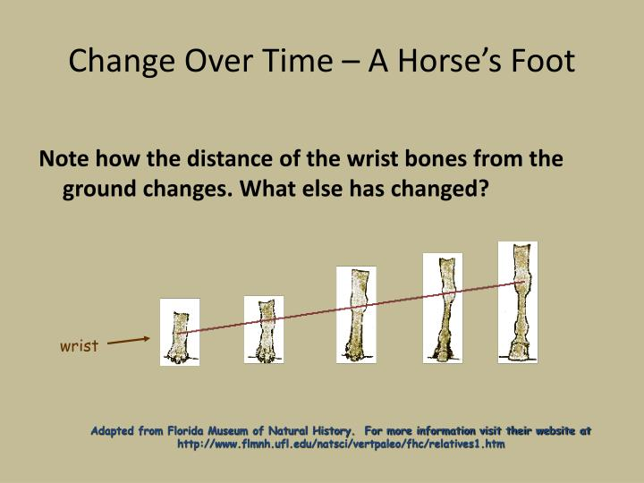 Change Over Time – A Horse's Foot