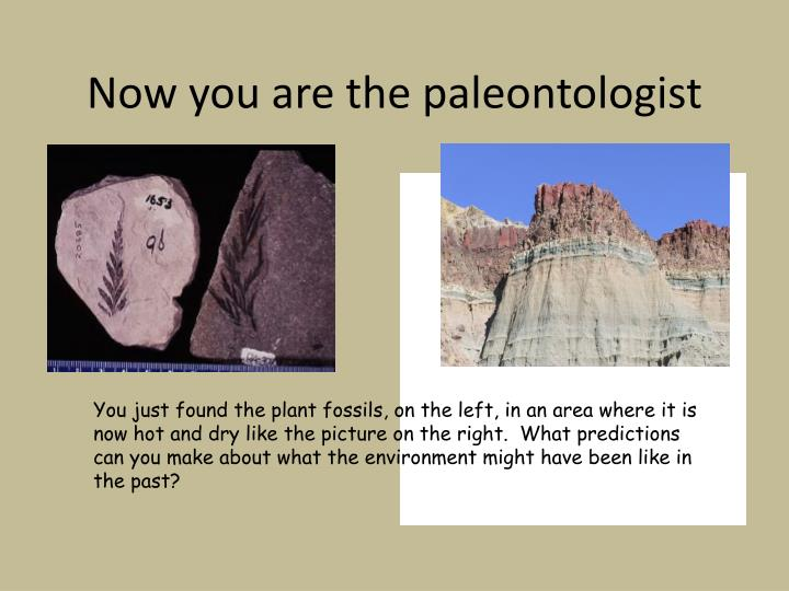 Now you are the paleontologist