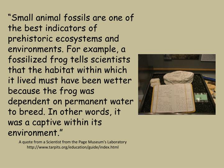 """Small animal fossils are one of the best indicators of prehistoric ecosystems and environments. For example, a fossilized frog tells scientists that the habitat within which it lived must have been wetter because the frog was dependent on permanent water to breed. In other words, it was a captive within its environment."""