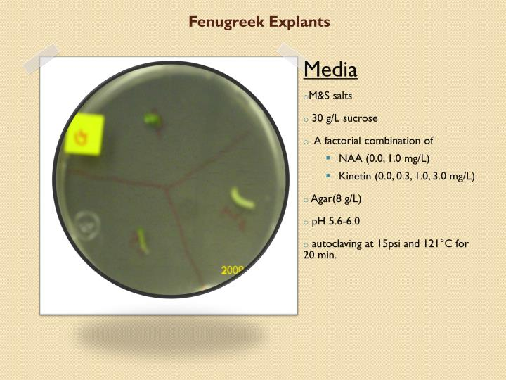 Fenugreek Explants