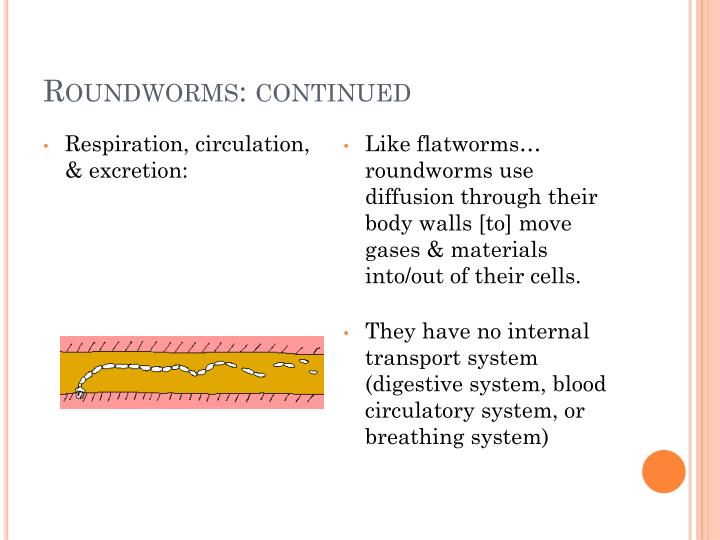Roundworms: continued