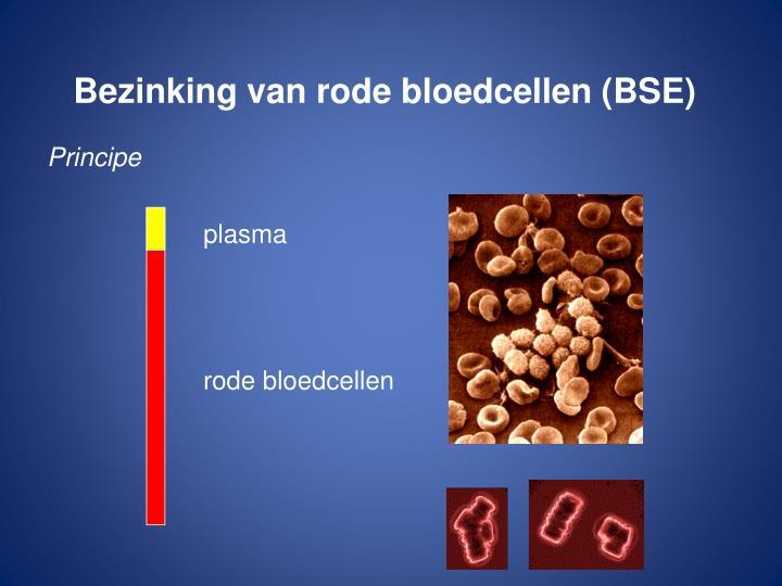 Bezinking van rode bloedcellen (BSE)