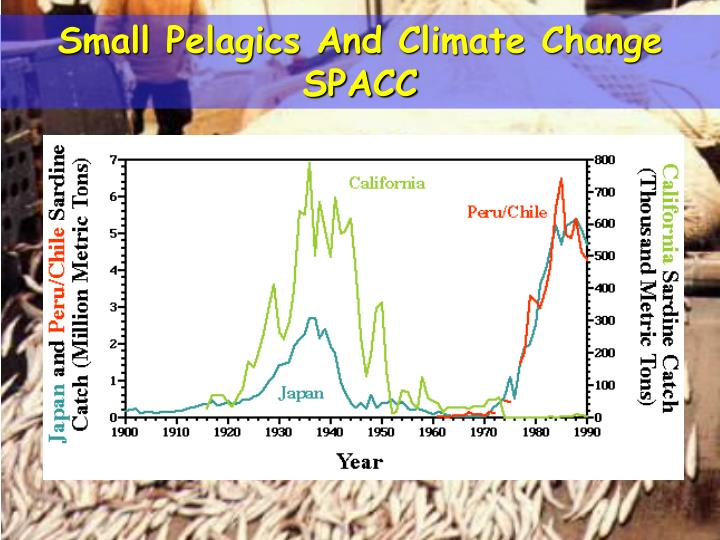 Small Pelagics And Climate Change   SPACC