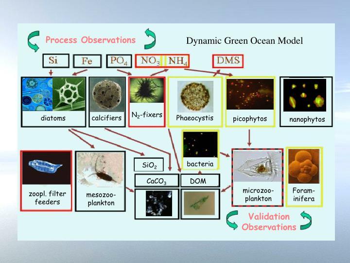 Dynamic Green Ocean Model