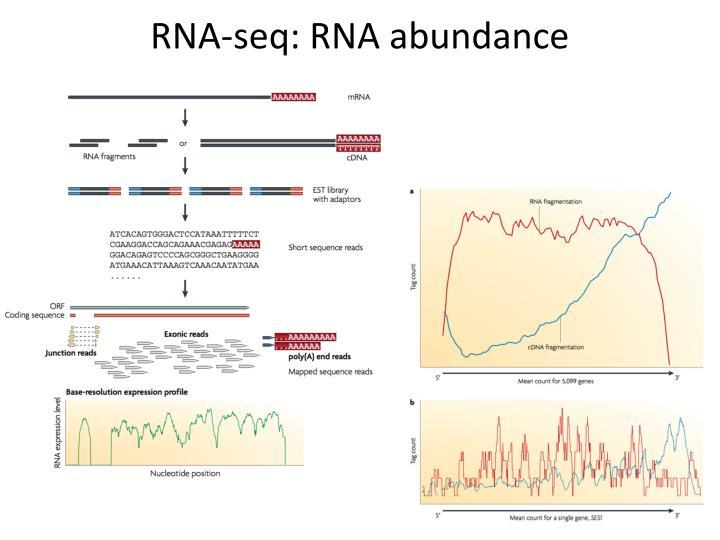 RNA-seq: RNA abundance