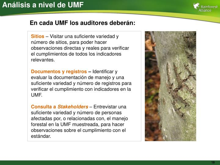 Análisis a nivel de UMF