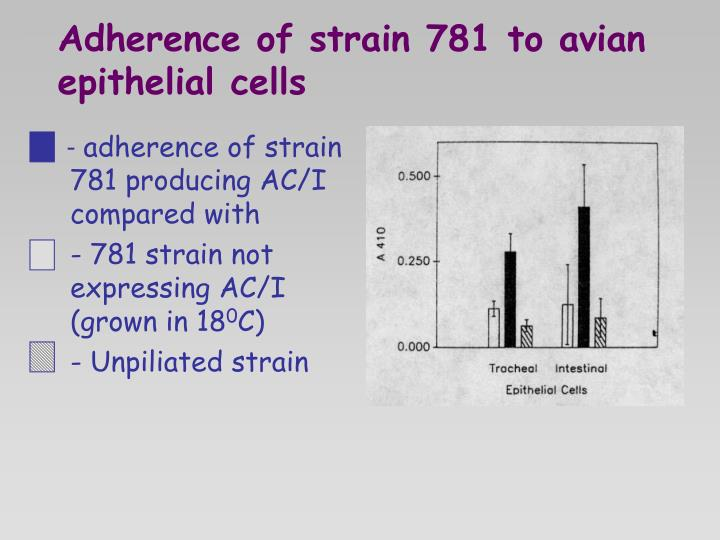 Adherence of strain 781 to avian epithelial cells