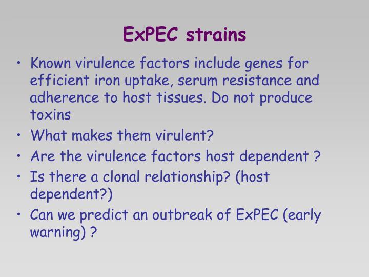 ExPEC strains