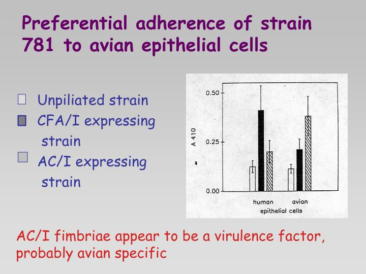 Preferential adherence of strain 781 to avian epithelial cells
