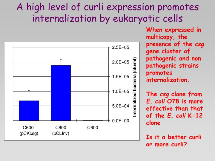 A high level of curli expression promotes  internalization by eukaryotic cells