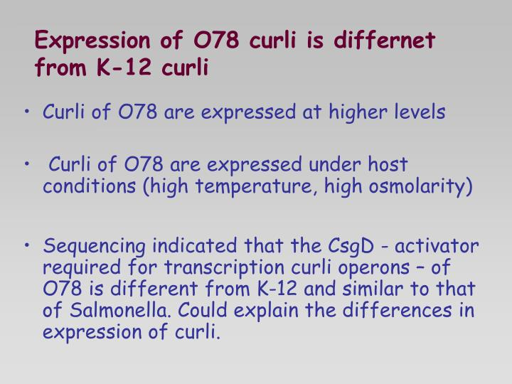Expression of O78 curli is differnet from K-12 curli