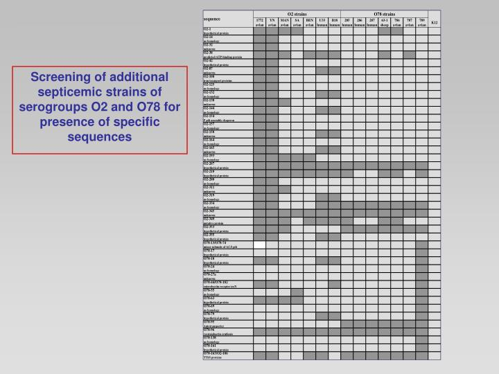 Screening of additional septicemic strains of serogroups O2 and O78 for presence of specific sequences