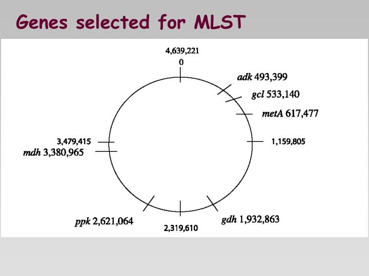 Genes selected for MLST