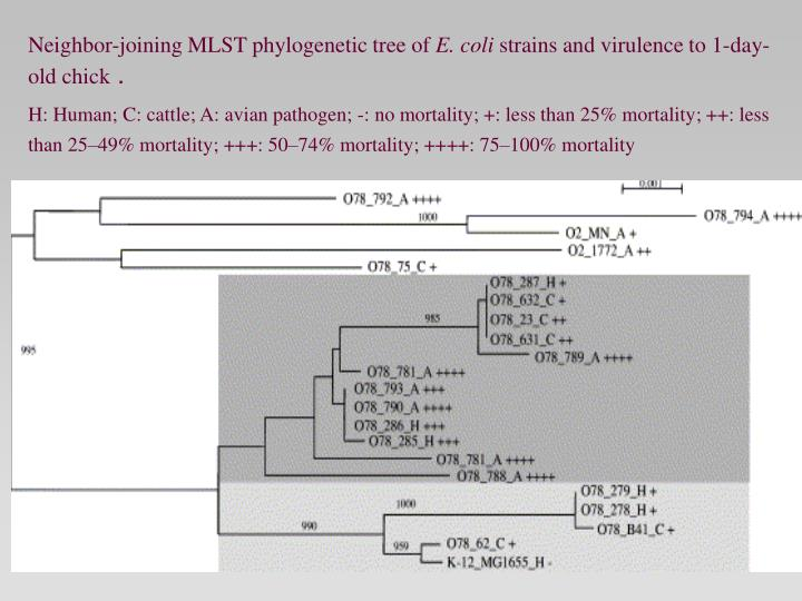 Neighbor-joining MLST phylogenetic tree of