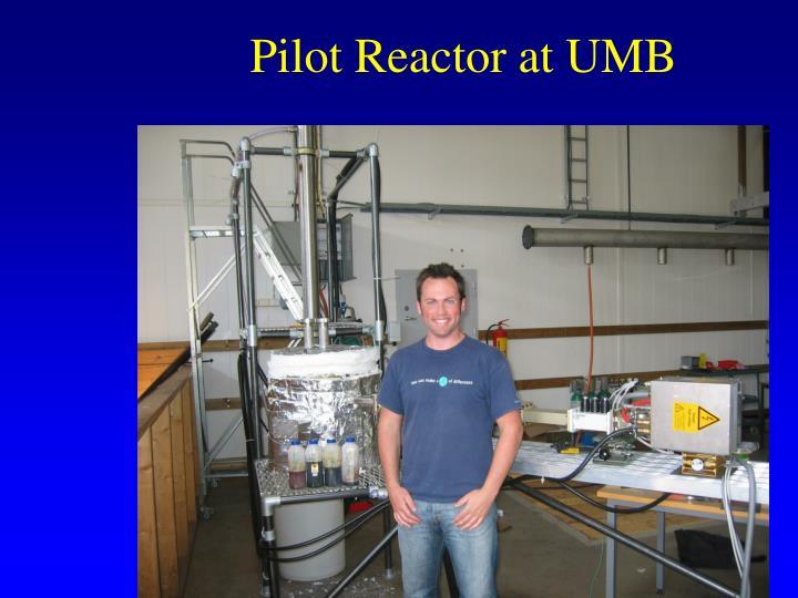 Pilot Reactor at UMB