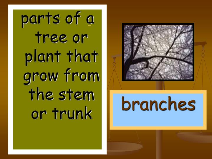 parts of a tree or plant that grow from the stem or trunk