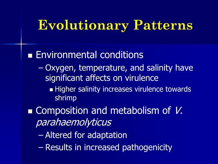 Evolutionary Patterns
