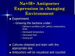 na h antiporter expression in changing environment