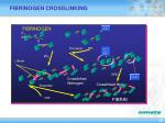 fibrinogen crosslinking