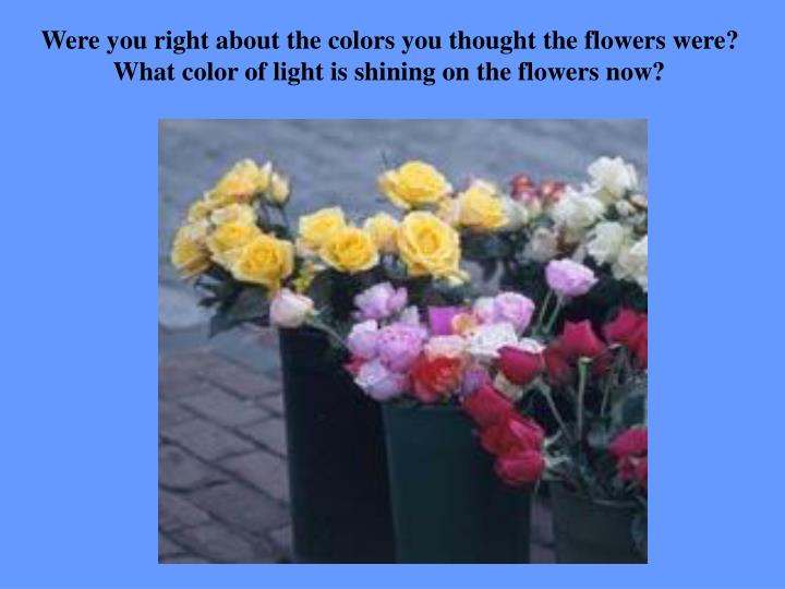 Were you right about the colors you thought the flowers were? What color of light is shining on the flowers now?