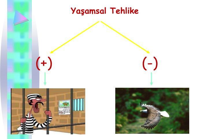 Yaamsal Tehlike