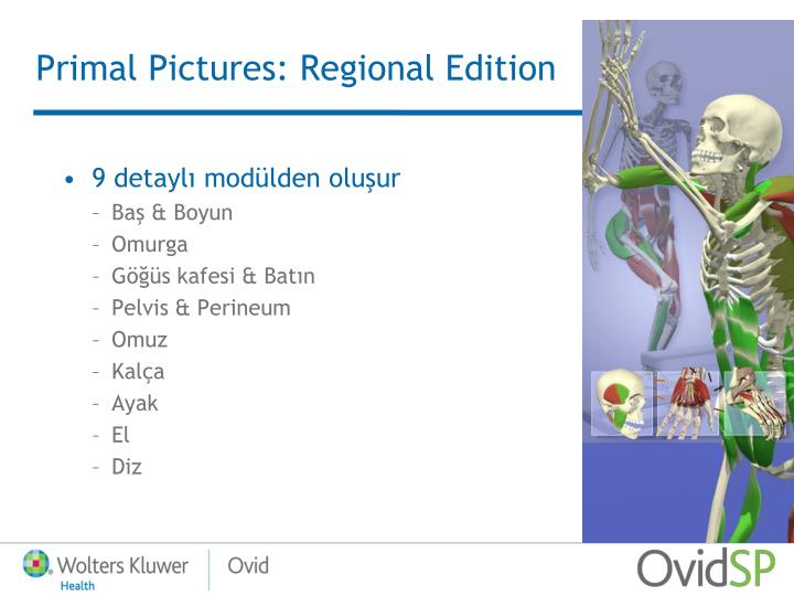 Primal Pictures: Regional Edition