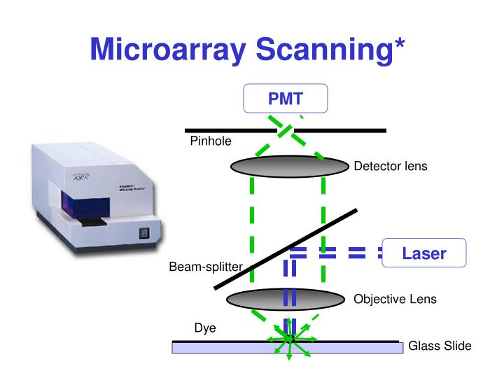 Microarray image gridding celebrity