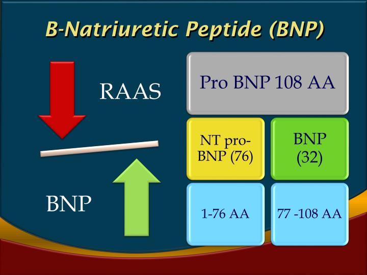 B-Natriuretic Peptide (BNP)