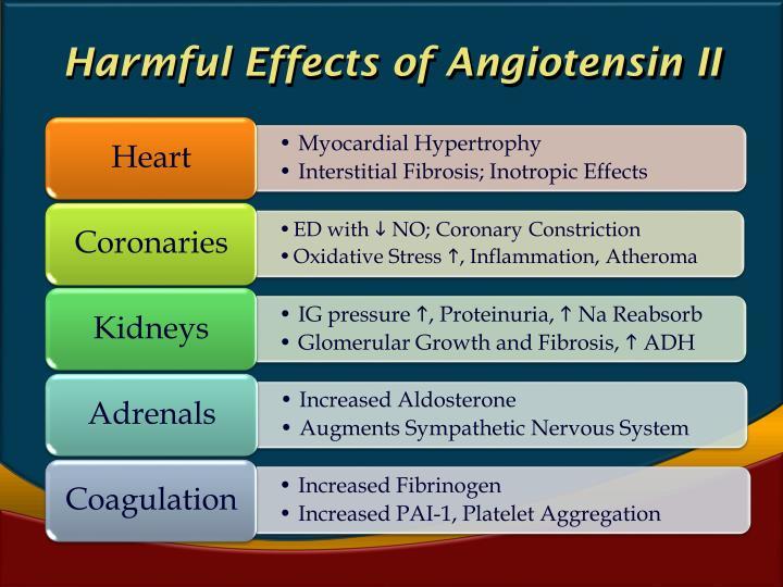 Harmful Effects of Angiotensin II