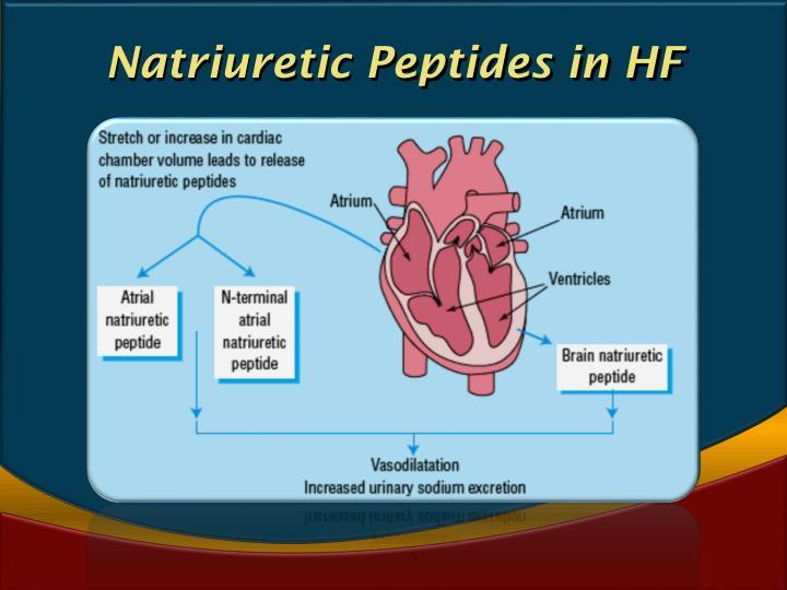 Natriuretic Peptides in HF