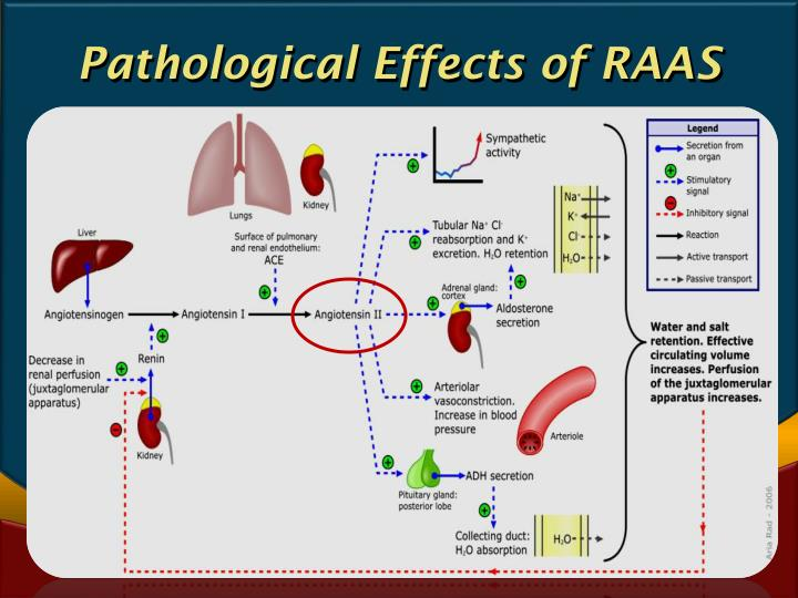 Pathological Effects of RAAS