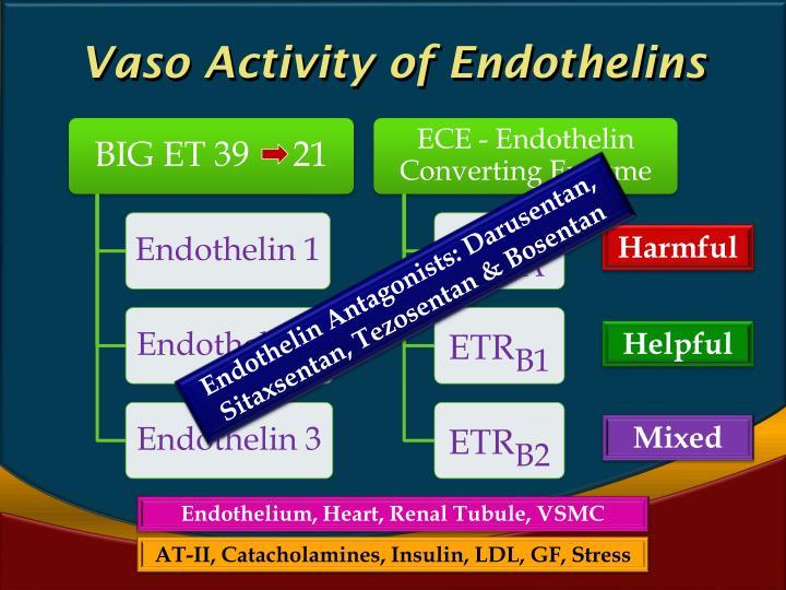 Vaso Activity of Endothelins