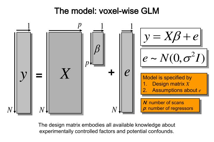 The model: voxel-wise GLM