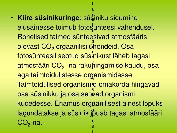 Kiire süsinikuringe