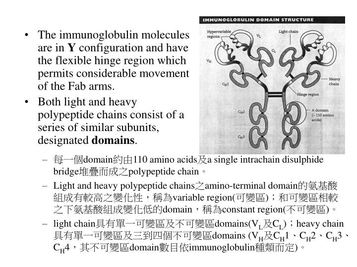 The immunoglobulin molecules are in