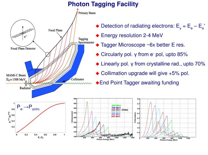 Photon Tagging Facility