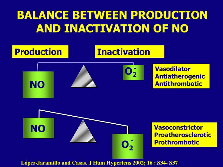 BALANCE BETWEEN PRODUCTION AND INACTIVATION OF NO