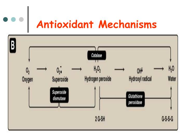 Antioxidant Mechanisms