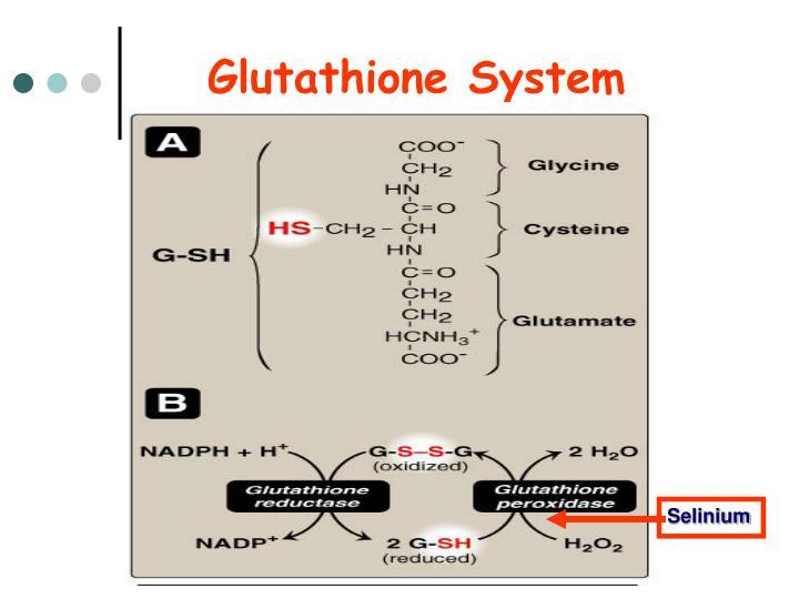 Glutathione System