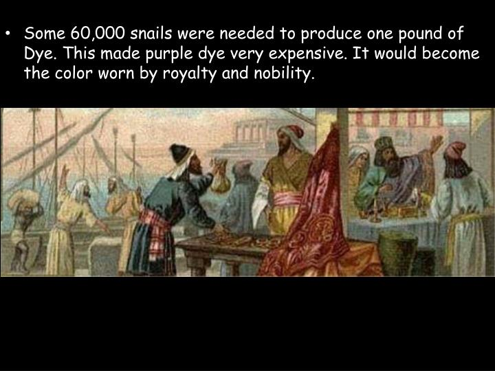 Some 60,000 snails were needed to produce one pound of Dye. This made purple dye very expensive. It would become the color worn by royalty and nobility.