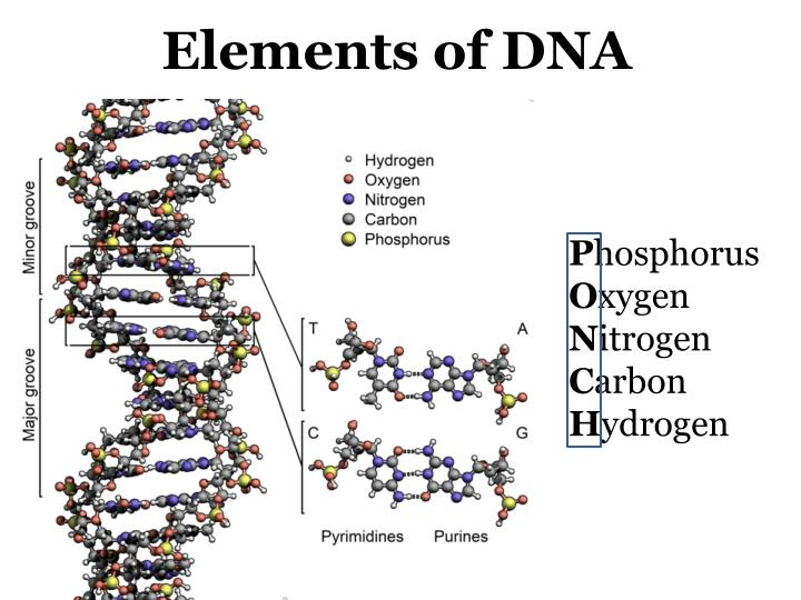 Elements of DNA