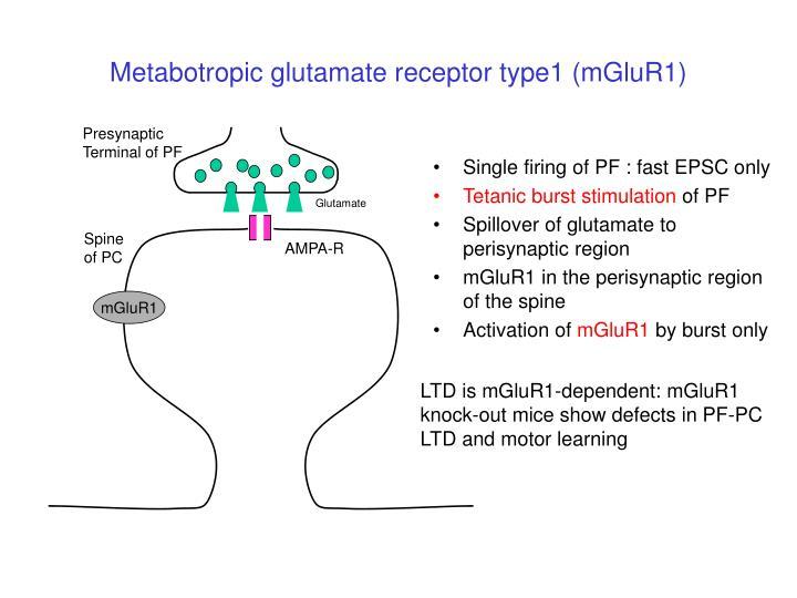 Metabotropic glutamate receptor type1 (mGluR1)