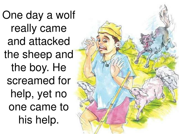 One day a wolf really came and attacked the sheep and the boy. He screamed for help, yet no one came to his help.