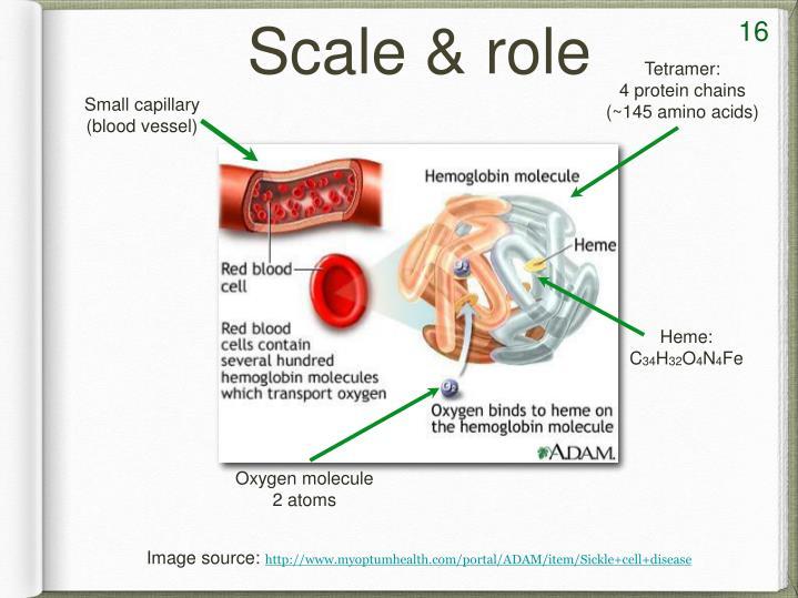 Small capillary