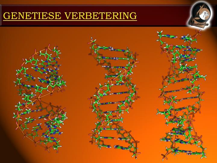 GENETIESE VERBETERING